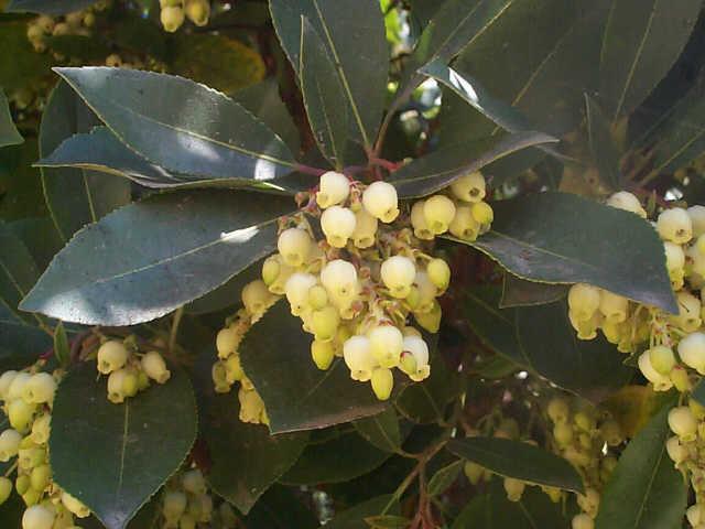 La plante du jour for Plante synonyme